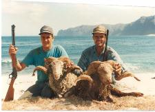Hybrid Sheep Trophies